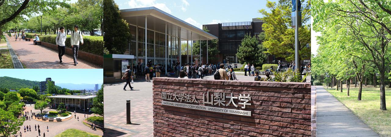 UNIVERSITY OF YAMANASHI   National university corporation on