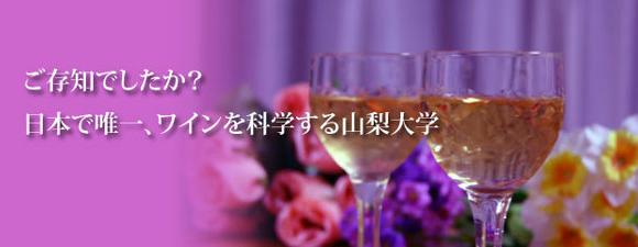 日本で唯一、ワインを科学する山梨大学画像